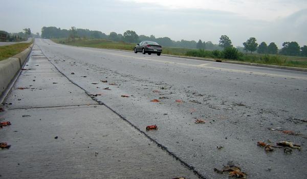 Χιλιάδες βατράχια κατέκλυσαν την Εγνατία οδό
