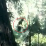 Bigfoot, φάρσα ή κάτι άλλο; (video)