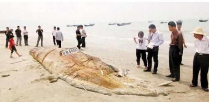 Ξεβράστηκε «θαλάσσιο τέρας» στην Κίνα