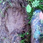 Εμφάνιση Bigfoot στην Αγγλία;