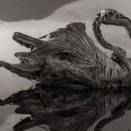 Κάθε ζωντανός οργανισμός που θα βρεθεί στη λίμνη μετατρέπεται σε… πέτρα!