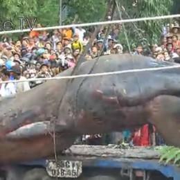 Γιγαντιαία φάλαινα(;) «δοξάστηκε» στο Βιετνάμ;