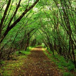 Μοναδικό φαινόμενο: το έδαφος ενός δάσους στον Καναδά… αναπνέει!